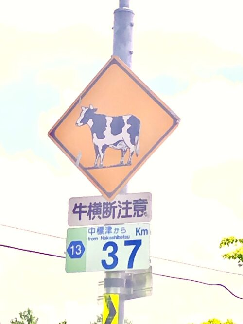 cow xing