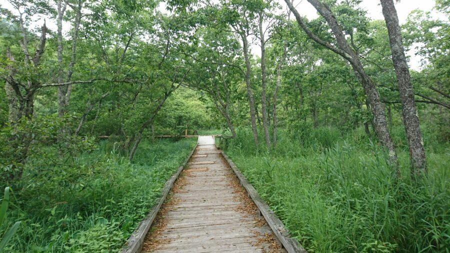 Marshland Walking Course in Onnenai, Hokkaido