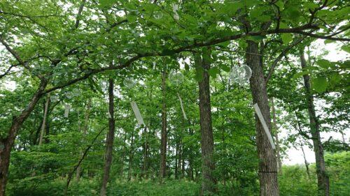 windchimes in forest
